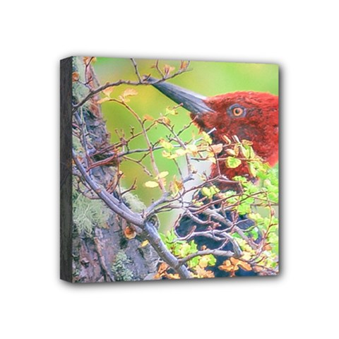 Woodpecker At Forest Pecking Tree, Patagonia, Argentina Mini Canvas 4  X 4  by dflcprints