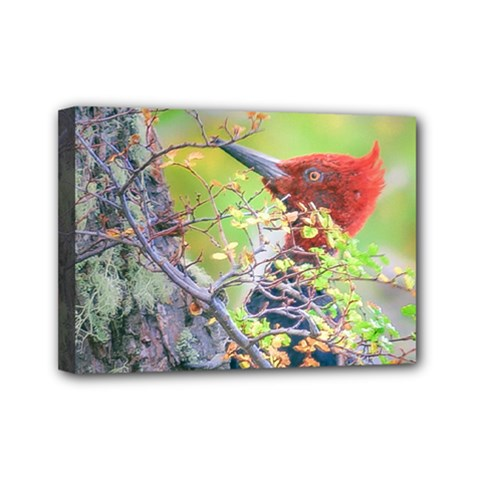 Woodpecker At Forest Pecking Tree, Patagonia, Argentina Mini Canvas 7  X 5  by dflcprints