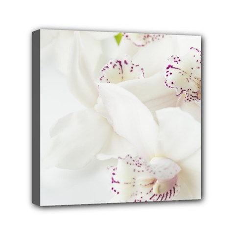Orchids Flowers White Background Mini Canvas 6  X 6  by Nexatart