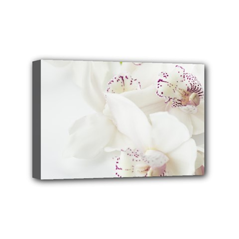 Orchids Flowers White Background Mini Canvas 6  X 4  by Nexatart