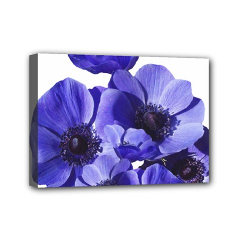 Poppy Blossom Bloom Summer Mini Canvas 7  x 5