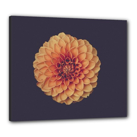 Art Beautiful Bloom Blossom Bright Canvas 24  X 20  by Nexatart
