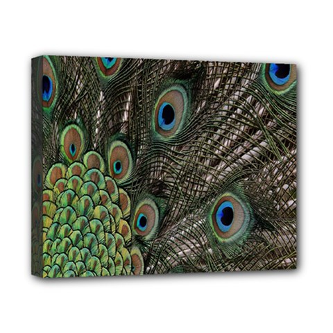 Close Up Of Peacock Feathers Canvas 10  X 8  by Nexatart