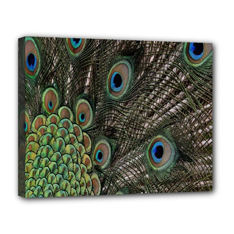 Close Up Of Peacock Feathers Canvas 14  X 11  by Nexatart
