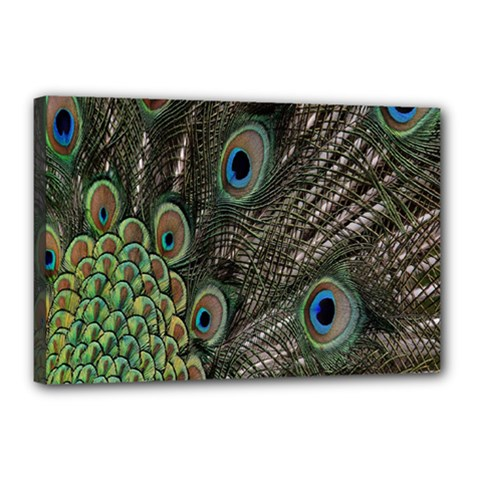 Close Up Of Peacock Feathers Canvas 18  X 12  by Nexatart