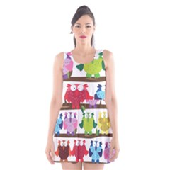 Funny Owls Sitting On A Branch Pattern Postcard Rainbow Scoop Neck Skater Dress by Mariart