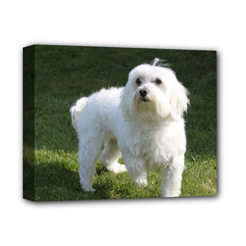 Maltese Full Deluxe Canvas 14  x 11  by TailWags