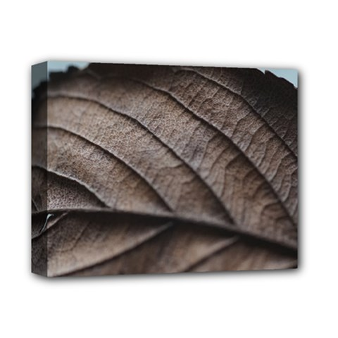 Leaf Veins Nerves Macro Closeup Deluxe Canvas 14  X 11  by BangZart
