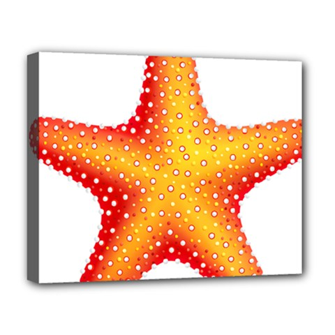 Starfish Deluxe Canvas 20  X 16   by BangZart