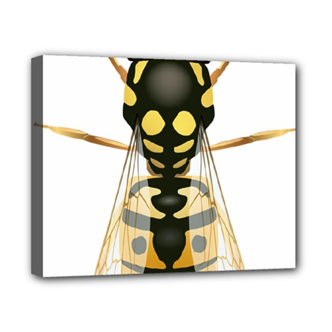 Wasp Canvas 10  X 8  by BangZart