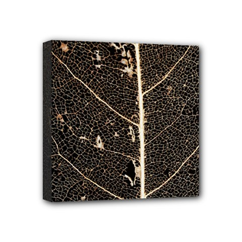 Vein Skeleton Of Leaf Mini Canvas 4  X 4  by BangZart