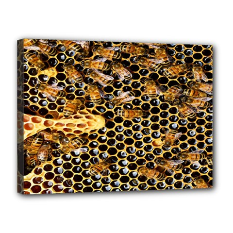 Queen Cup Honeycomb Honey Bee Canvas 16  X 12  by BangZart