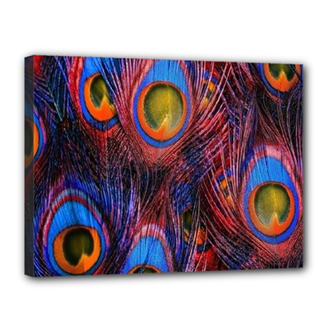 Pretty Peacock Feather Canvas 16  X 12  by BangZart
