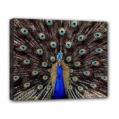 Peacock Deluxe Canvas 20  X 16   by BangZart