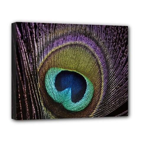 Peacock Feather Deluxe Canvas 20  X 16   by BangZart