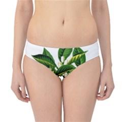 Bitter Branch Citrus Edible Floral Hipster Bikini Bottoms