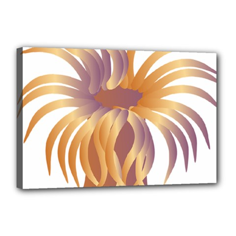 Sea Anemone Canvas 18  X 12  by Mariart