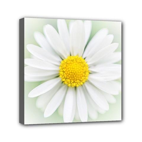 Art Daisy Flower Art Flower Deco Mini Canvas 6  X 6  by Nexatart