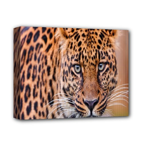 Tiger Beetle Lion Tiger Animals Leopard Deluxe Canvas 14  X 11  by Mariart