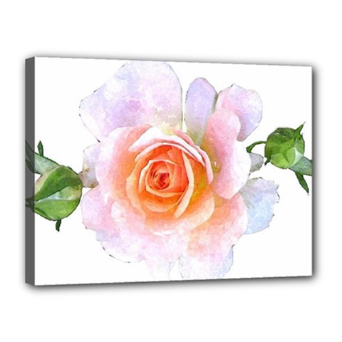 Pink Rose Flower, Floral Watercolor Aquarel Painting Art Canvas 16  X 12  by picsaspassion