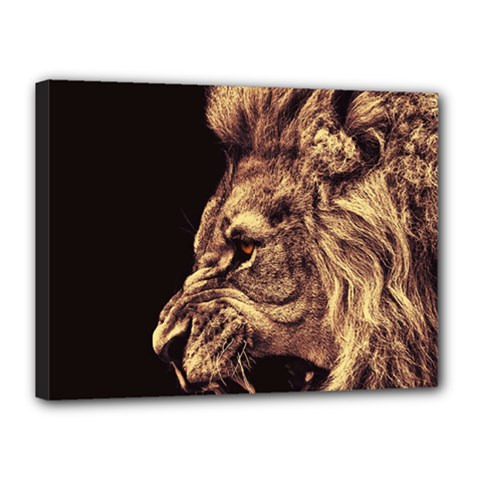 Angry Male Lion Gold Canvas 16  X 12  by Celenk