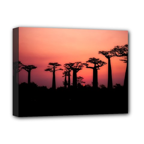 Baobabs Trees Silhouette Landscape Deluxe Canvas 16  X 12