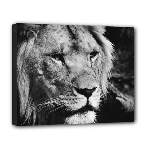 Africa Lion Male Closeup Macro Deluxe Canvas 20  X 16   by BangZart