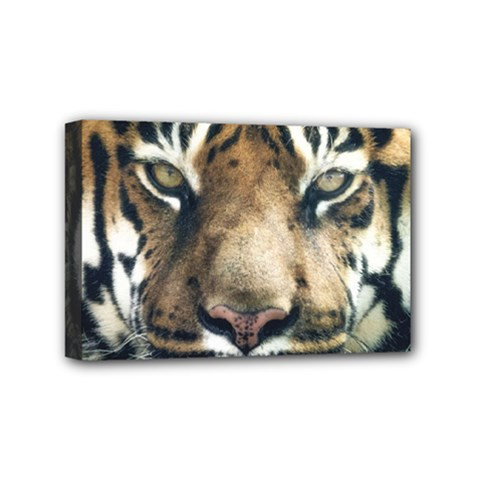 Tiger Bengal Stripes Eyes Close Mini Canvas 6  X 4  by BangZart