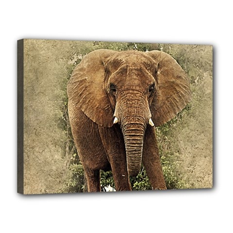 Elephant Animal Art Abstract Canvas 16  X 12  by Celenk