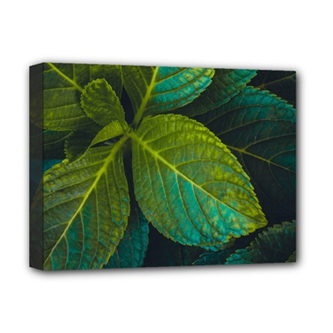Green Plant Leaf Foliage Nature Deluxe Canvas 16  X 12   by Nexatart