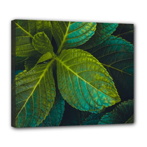 Green Plant Leaf Foliage Nature Deluxe Canvas 24  X 20   by Nexatart