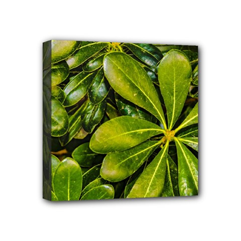 Top View Leaves Mini Canvas 4  X 4  by dflcprints