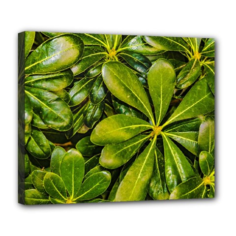 Top View Leaves Deluxe Canvas 24  X 20   by dflcprints