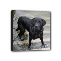 Please Swim - Mini Canvas 4  x 4  (Stretched)
