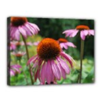 Coneflower print - Canvas 16  x 12  (Stretched)