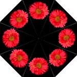 Painted Daisy Umbrella - Folding Umbrella