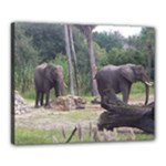 canvas 16x20 - elephant - Canvas 20  x 16  (Stretched)