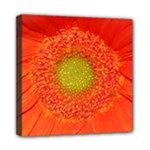 Orange gerbera daisy - Mini Canvas 8  x 8  (Stretched)