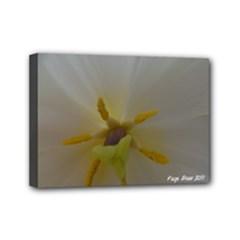7 x 5 kayla - Mini Canvas 7  x 5  (Stretched)