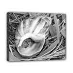 seashell bw - Canvas 10  x 8  (Stretched)