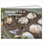 Tiny tortoises - 7x5 Photo Book (20 pages)