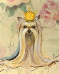 Yorkshire Terrier Princess