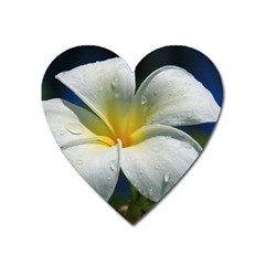 Frangipani tropical flower Large Sticker Magnet (Heart) by Koalasandkangasplus