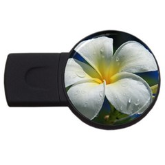 Frangipani Tropical Flower 4gb Usb Flash Drive (round) by Koalasandkangasplus