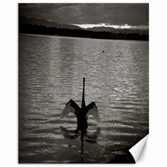 Swan, Canberra 11  X 14  Unframed Canvas Print by artposters