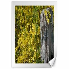 Yellow Bells 20  X 30  Unframed Canvas Print