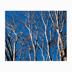 Trees on Blue Sky Glasses Cleaning Cloth by Elanga