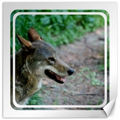 Red Wolf Canvas 20  X 20  (unframed) by AnimalLover