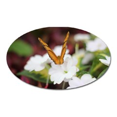 Butterfly 159 Magnet (Oval) by pictureperfectphotography