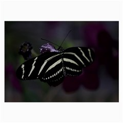 Butterfly 059 001 Glasses Cloth (large, Two Sided) by pictureperfectphotography